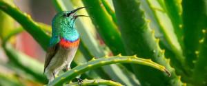 Aloe vera : ses différents bienfaits et nos conseils...