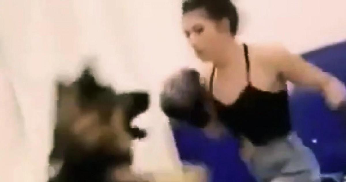 Une vidéo d'une femme boxant son chien déclenche l'indignation